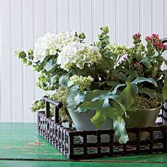 indoor container gardening ideas 1000 images about indoor container gardens on