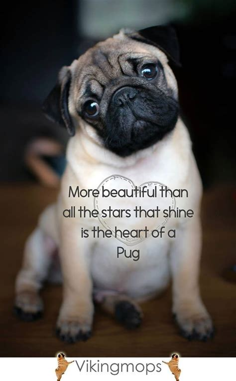 quotes on pugs 127 best pugs images on doggies pets and baby pugs