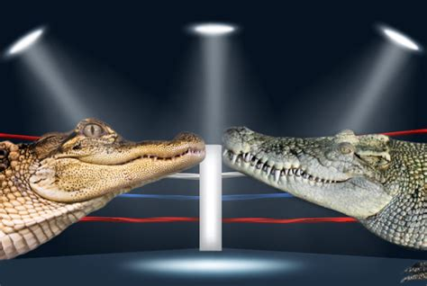 the difference between alligators and crocodiles what s the difference between an alligator and a crocodile mental floss
