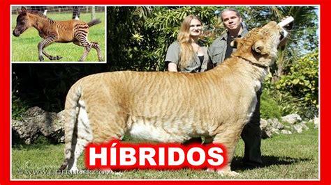 fotos animales hibridos reales animales hibridos hermosos youtube