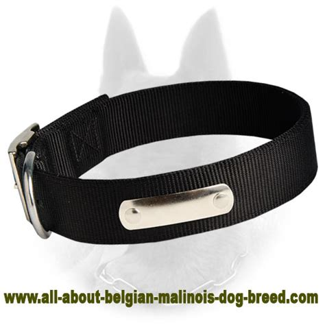 collars with name 2 ply collar with name tag for belgian malinois c42 1065 2 ply
