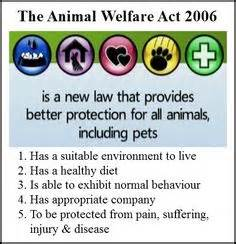 Google Sydney Office 1000 Images About Animal Welfare On Pinterest Animal