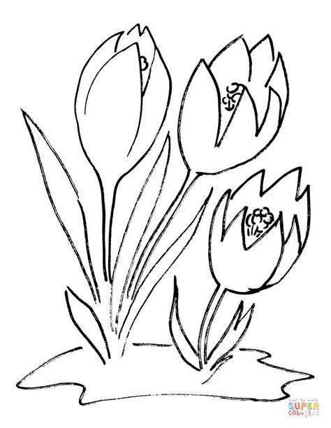 crocus flower coloring page crocus flower coloring page free printable coloring pages