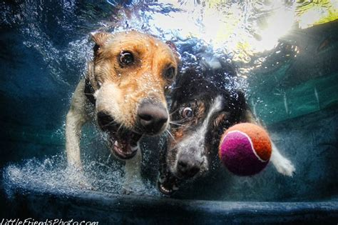 dogs underwater underwater photography by seth casteel damn cool pictures