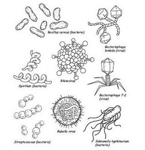 coloring pages of vires to print 48 best images about germs lesson on pinterest