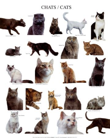types of cats different types of cats with pictures