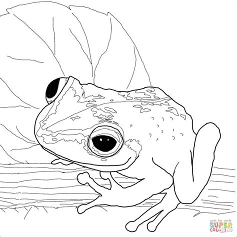 coqui frog coloring page coqui frog coloring page free printable coloring pages