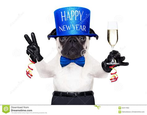 new years pug new years pug 28 images pug dogs happy new year puppy newyear puppies happy new