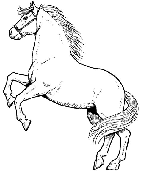 Coloring Pages Printable Horses | free printable horse coloring pages for kids