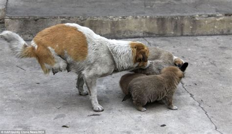 homeless puppies two legged stray momma cares for homeless family