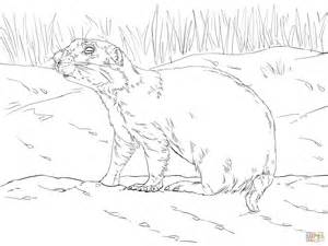 coloring page prairie dog prairie dog coloring page