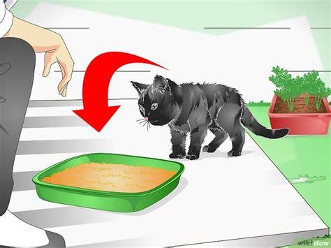 come tenere un gatto in casa 3 modi per tenere un gatto lontano dalle fioriere