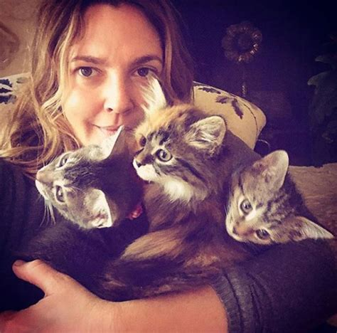 Drew Barrymore Supports Pet Adoption by Drew Barrymore Reveals Adoption News
