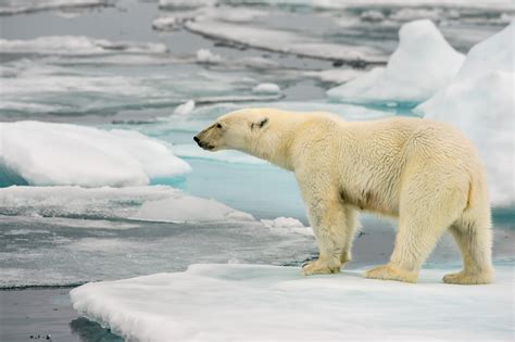 News Coverage Changes And So Climate Change Is Getting Worse And So Is The Media S Coverage Of It Alternet
