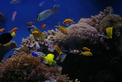 akuarium laut tawar cantiknya ikan hias akuarium air laut pilih yuk