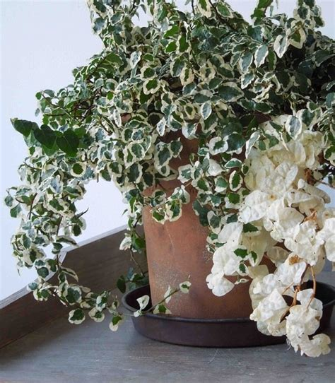 indoor plants no sunlight plants that grow without sunlight 17 best plants to grow
