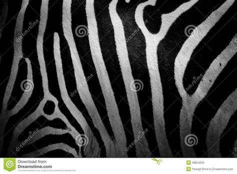 zebra skin color zebra skin stock photo image 49854243