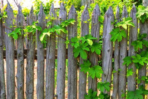 holzzaun rustikal 40 beautiful garden fence ideas