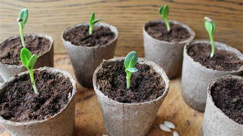 indoor plants   improve  office environment