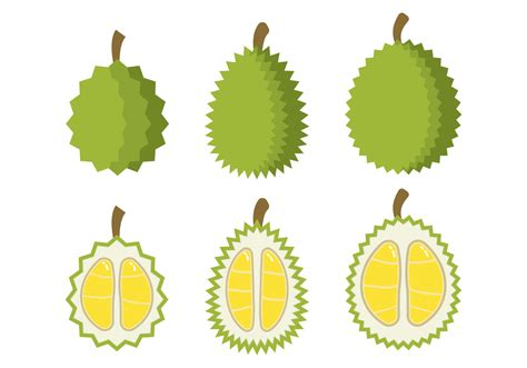 Durian Kupas Pack durian free vector 2874 free downloads