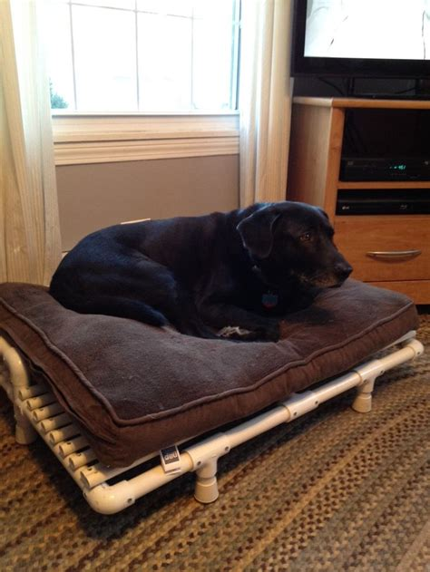 pvc pipe dog bed 25 best ideas about raised dog beds on pinterest pvc