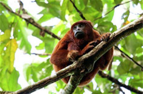 Monkey Jugle 9471 tropical rainforest biomes genetic and ecosystem