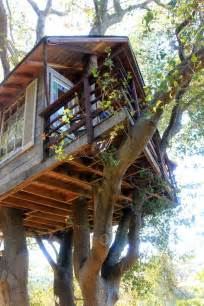 livable tree house plans livable tree house designs 28 images livable treehouse plans free amazing