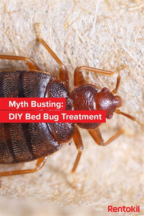 bed bugs at work 119 best images about bed bugs on pinterest skin rash