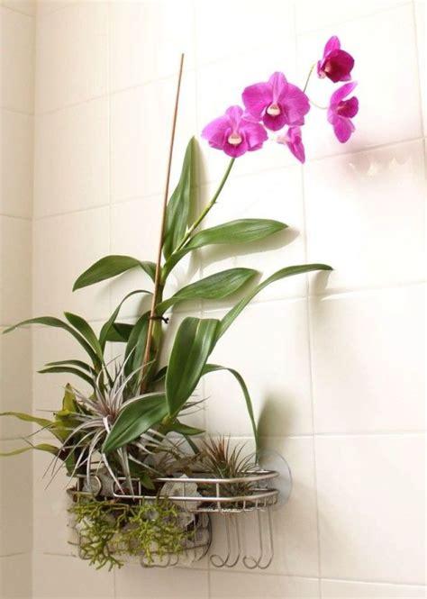 air plants bathroom 25 best ideas about hanging air plants on pinterest air