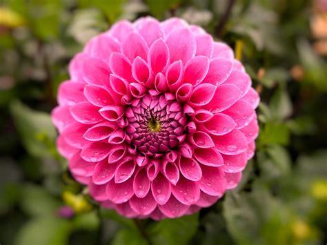 flower plant nature 183 free photo on pixabay