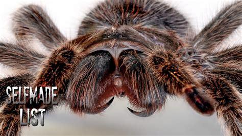 wie kommen spinnen ins haus image gallery spinnen
