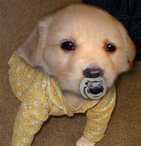 baby dogs se hunde bilder se hundebild und foto tier bilder