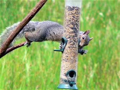 how to keep squirrels out of your bird feeder the money pit