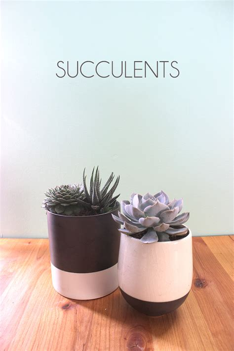 succulents that don t need light five household plants for a black thumb the girl creative