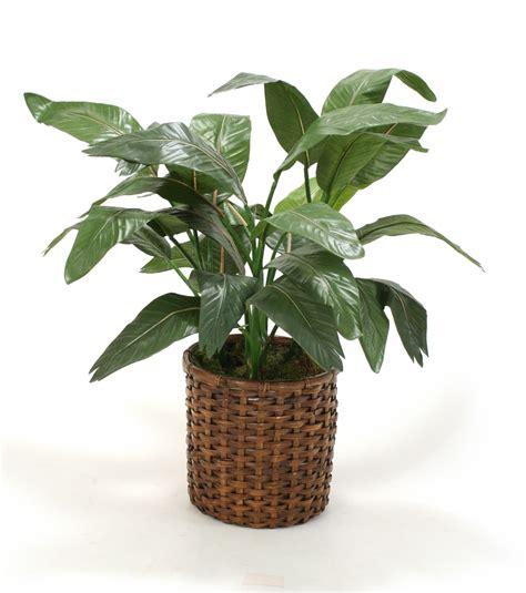 tropical silk floor plant in split rattan basket free