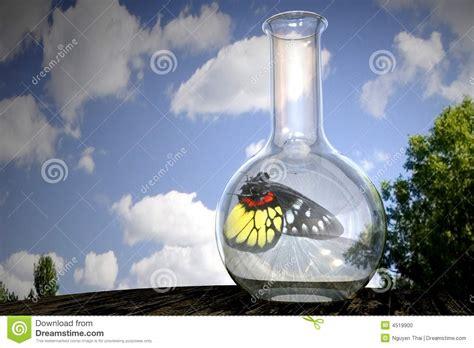 imagenes mariposas saliendo de un frasco mariposa en un frasco foto de archivo imagen 4519900