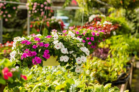 family garden center eckert s gardening center and plant nursery eckert s