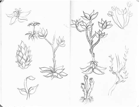 free sea plants coloring pages