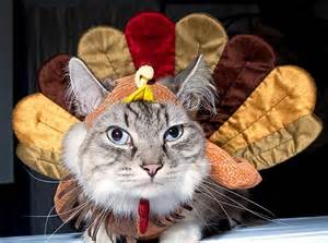 here are 40 animals who are more ready for thanksgiving