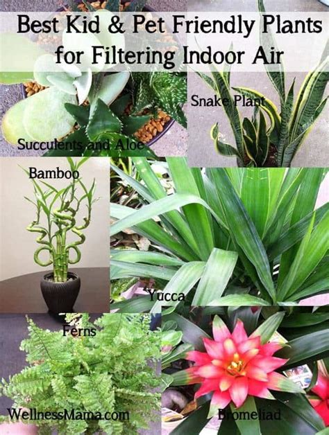 dog friendly house plants how to filter indoor air with plants wellness mama