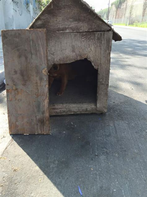 dog house rescue heartwarming rescue of dog trapped in nailed up dog house