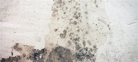 white mold on concrete wall how to remove mold from concrete basement walls