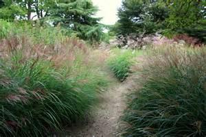 glorious goodnestone part ii graceful grasses the frustrated gardener