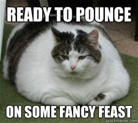 Fancy Cat Meme - ready to pounce on some fancy feast fat cat quickmeme