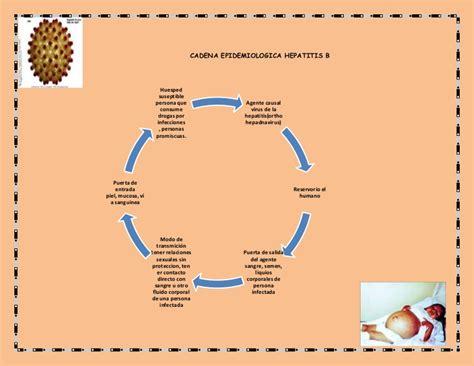 cadenas polipeptídicas que es cadena epidemiologica hepatitis b