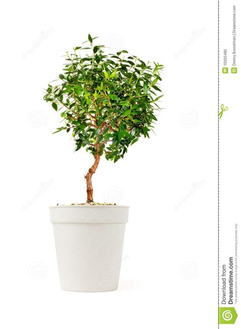 decorative tree small decorative tree stock photo image 10325490