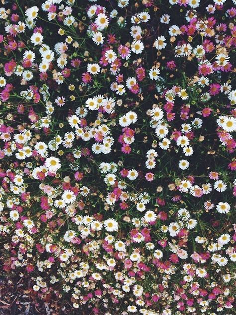 imagenes hipsters de flores what this palace wants is release lorde we heart it
