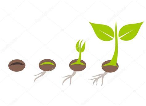 imagenes korn 3d etapas de la germinaci 243 n de semillas de la planta