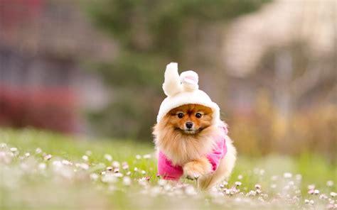 hd cute puppy wallpaper free download jpg desktop background cute puppy running on grass hd wallpapers new hd wallpapers