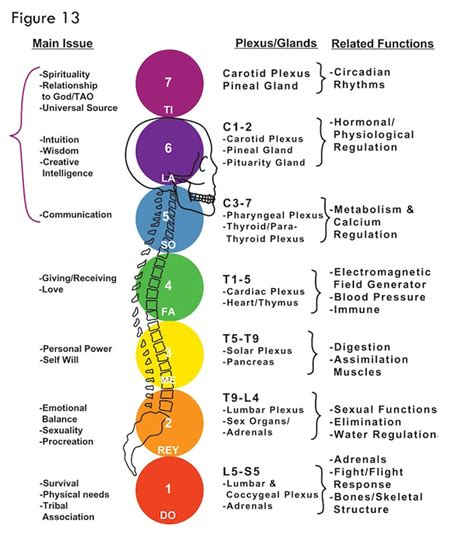 Tutorial Chakra To Strengthening Your Immune System therapeutic bodywork